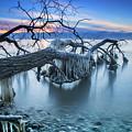 Frozen Morning 2 by Randy Kostichka