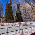 Frozen Pond / Chicago Botanic Garden by Vickie Courville