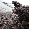 Frozen Shoreline by Nicholas Miller