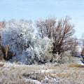 Frozen Trees By The Lake by Alexander Ferguson