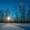 Frozen Trees Under A Winter Sunset by Alex Papp