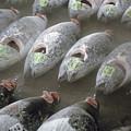 Frozen Tuna Fish At The Tsukiji by Joel Sartore