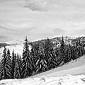 Frozen Valley 4 Bw  by Alex Art and Photo