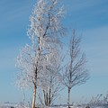 Frozen Views 1 by Jouko Lehto