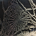 Frozen Web by Casper Cammeraat