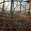 Frozen Web by Megan Greenfeld