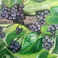 Fruit On The Vine by Janey Longworth