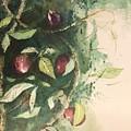Fruit by Ralph Herrington Farabee