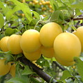 Fruits by Elek Gyorgy