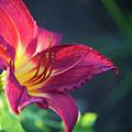 Fuchsia Glow by Debbie Karnes