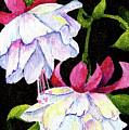 Fuchsias by Sherry Shipley