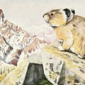 Fuertes, Louis Agassiz 1874-1927 - Burgess Animal Book For Children 1920 Pika by Louis Agassiz Fuertes