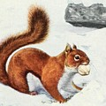 Fuertes, Louis Agassiz 1874-1927 - Burgess Animal Book For Children 1920 Red Squirrel by Louis Agassiz Fuertes