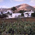 Fuerteventura Iv by Flavia Westerwelle