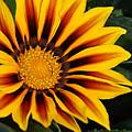 Full Bloom by Chauncy Holmes