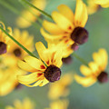 Full Bloom by Vivian Starnes