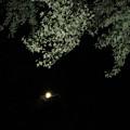 Full Moon by Amanda Kessel