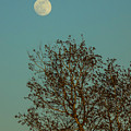 Full Moon At Sunset by William Tasker