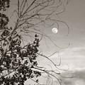 Full Moon Behind Cottonwood Tree by Marilyn Hunt