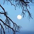 Full Moon Blue Sky by Barbara Henry