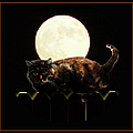Full Moon Cat by Gravityx9 Designs