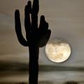 Full Moon by Jacek Joniec