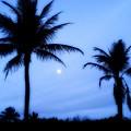 Full Moon Sunrise by Jenn Beck