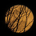 Full Moon Through The Branches by Zina Stromberg