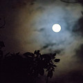 Full Moon  by Totto Ponce