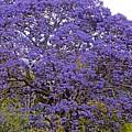 Full On Purple by Cheryl Cutler