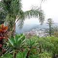 Funchal Maderia by Brett Winn