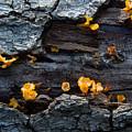 Fungi On Log by Douglas Barnett