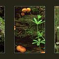 Fungi Times Three by Ward Thurman
