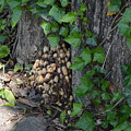 Fungus At Base Of Tree by Belinda Stucki