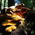 Fungus Colony 23 by Maciek Froncisz