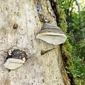Fungus Grows On A Tree Trunk by Ilan Rosen