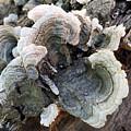 Fungus by James Pinkerton