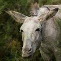 Funky Donkey by Angel Ciesniarska