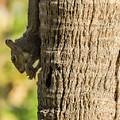 Funky Ear Squirrel by William Tasker