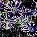 Funky Flowers by Anita Burgermeister