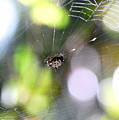 Funky Spider by Trudi Southerland