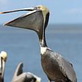 Funny Brown Pelican by Carol Groenen