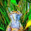 Funny Frog by Danielle Stephenson