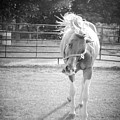 Funny Horse In Black And White by Kelly Hazel