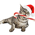 Funny Santa Cat With Candy Cane by Susan Schmitz