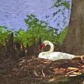Furman University Swan by Gary Adkins