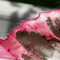 Furry Leaf by Rob Mandell