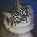 Furry Tabby Cat by Tish Wynne