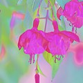 Fuchsia Flower Abstract by Linda Brody