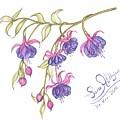 Fuschia Flowers by Sara Alhajeri